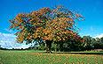 Arboriculture & Urban Woodland