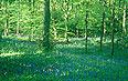 Woodland Design & Management